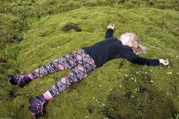 Мох в Исландии, Лавовые поля (1)