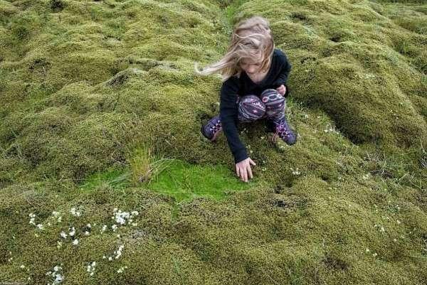 Мох в Исландии, Лавовые поля (10)