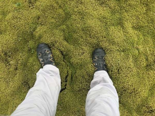 Мох в Исландии, Лавовые поля (13)