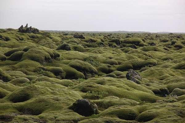 Мох в Исландии, Лавовые поля (5)