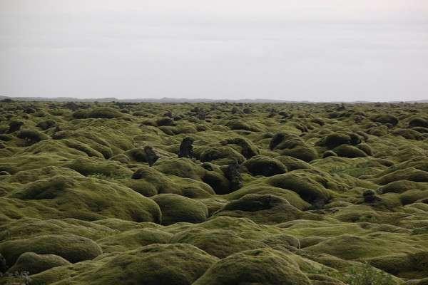Мох в Исландии, Лавовые поля (6)