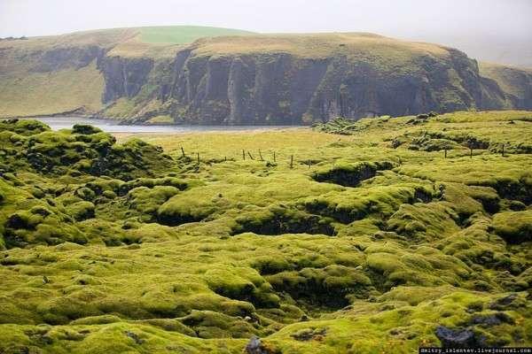 Мох в Исландии, Лавовые поля (7)