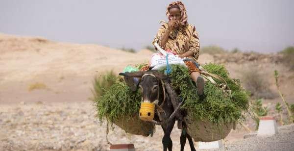chego-nelzya-delat-v-marokko-5