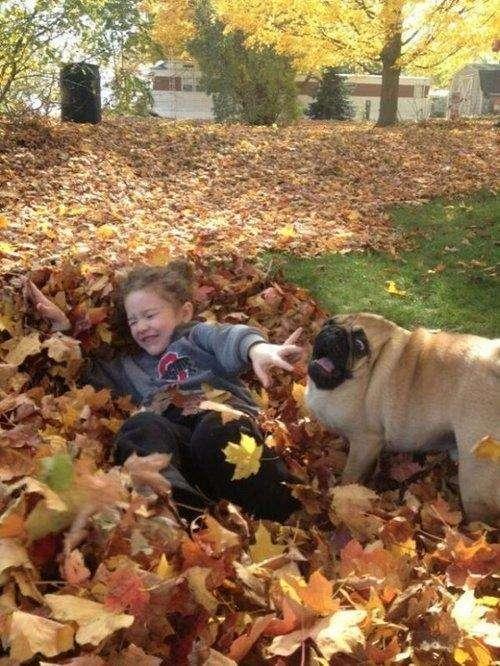 Милі і забавні тварини (30 фото)