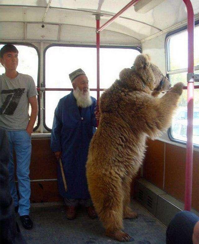 Розумом Росію не зрозуміти (22 фото)