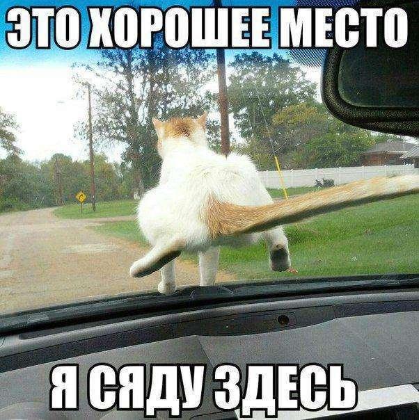 Кото-пост (34 фото)