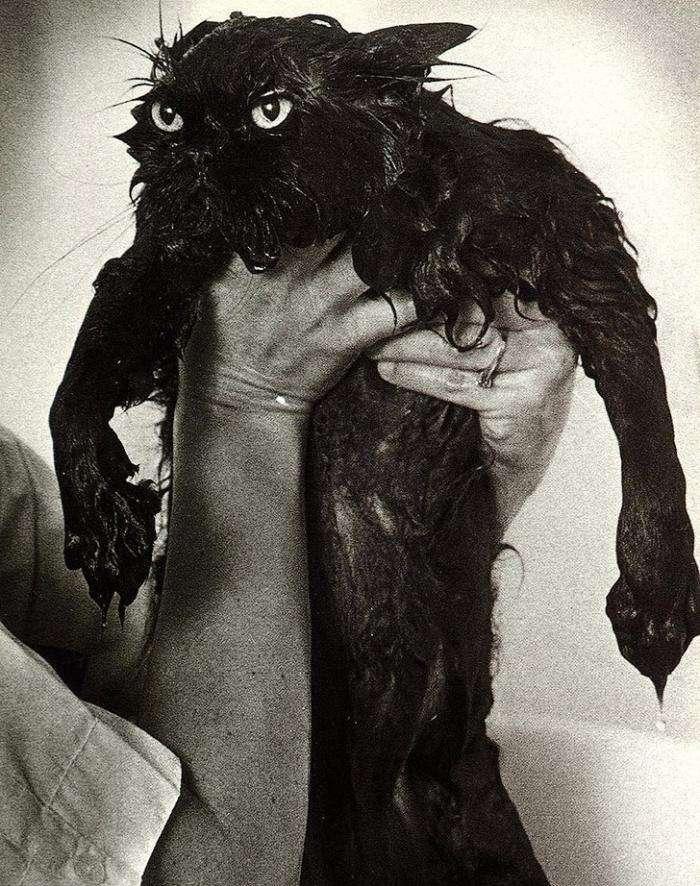 Мокрі коти (15 фото)