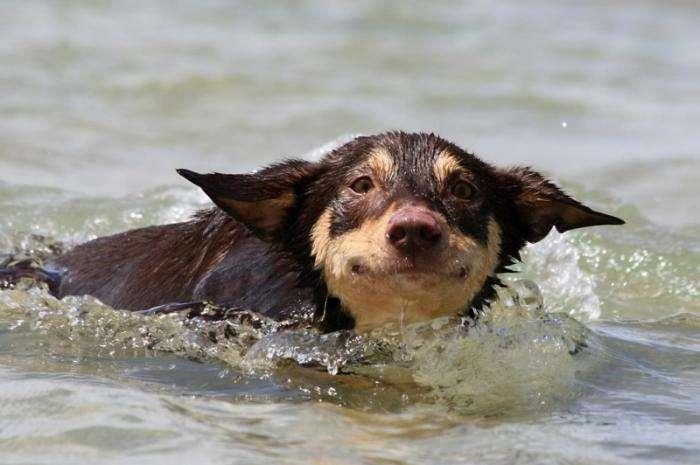 Милі і забавні тварини (54 фото)