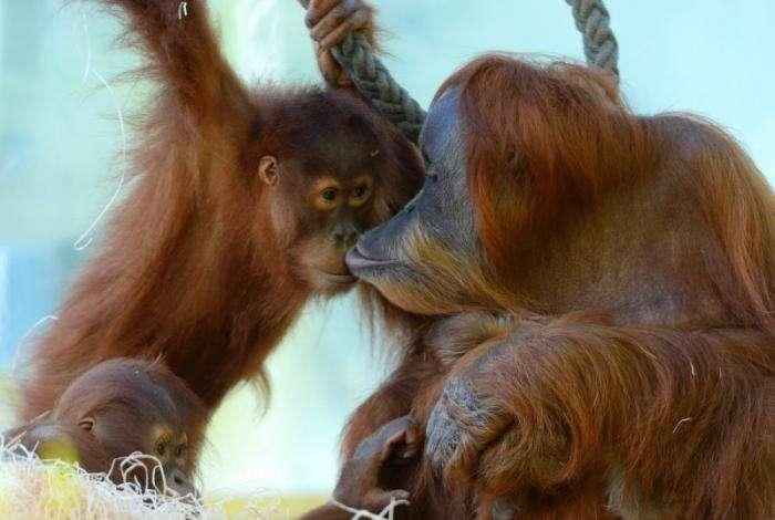 Милі і забавні тварини (29 фото)