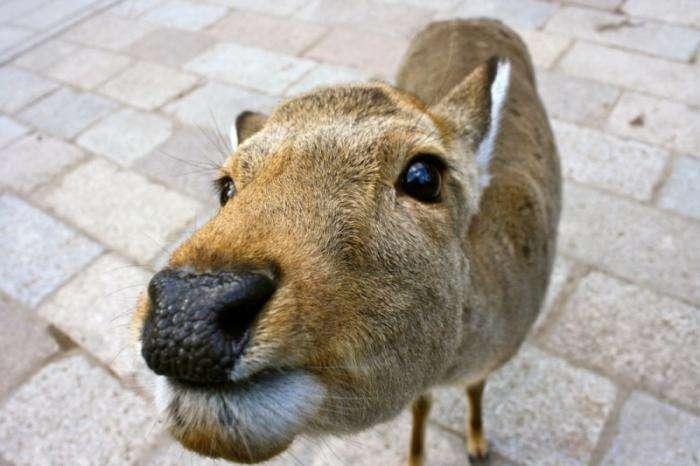 Забавні тварини (30 фото)
