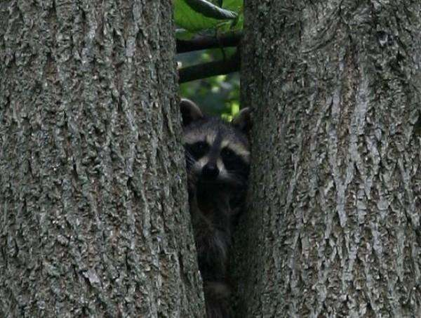 Пухнастий брат стежить за тобою (46 фото)