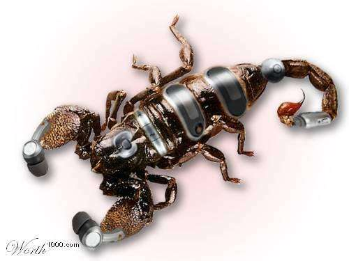 Нова гілка еволюції тварин (37 фото)