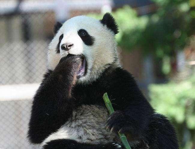 Зевающие тварини (28 фото)
