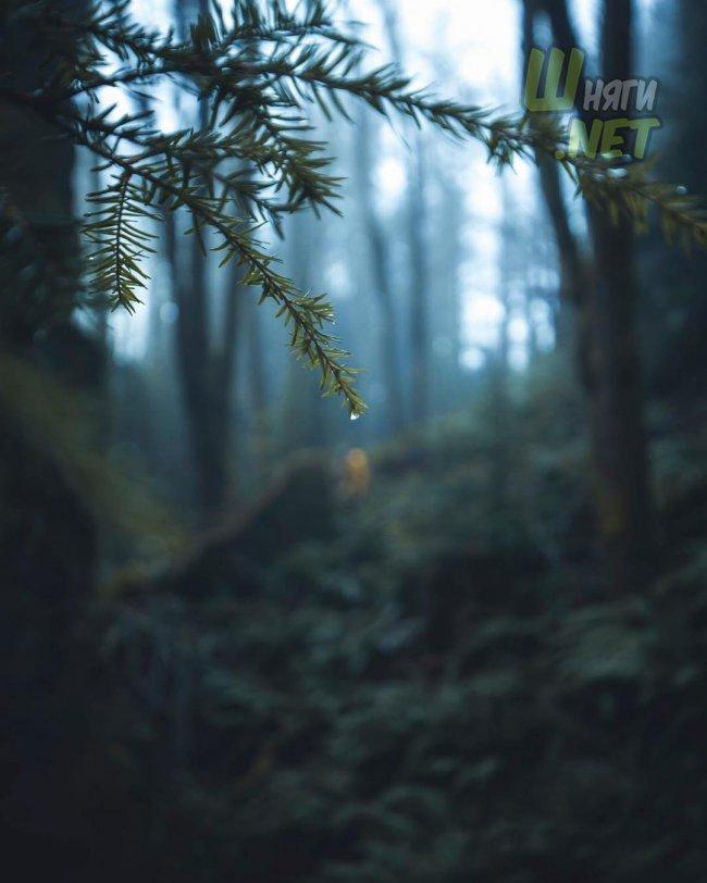 Леса Тихоокеанского северо-запада лес