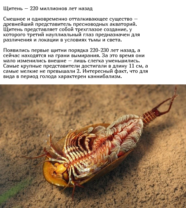 Древние существа, которые живут на нашей планете многие миллионы лет Всячина