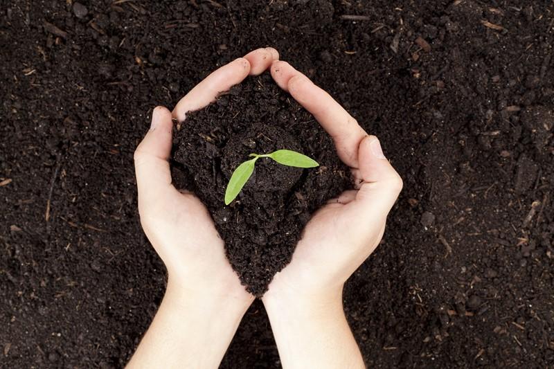 Правила выращивания перца Советы