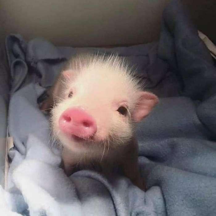 Очаровательные животные, которые вызовут улыбку и подарят позитив на весь день Интересное