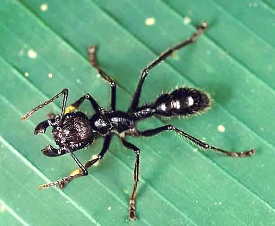 Пять самых ужасных насекомых планеты интересное