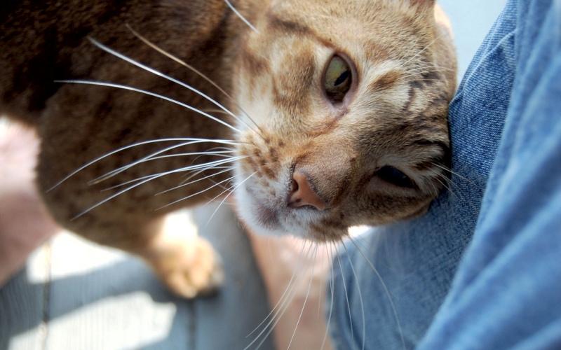 Язык кошек: самые важные фразы исследования