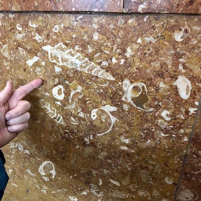 Древние окаменелости в московском метро: Узоры времён динозавров, которые может увидеть каждый