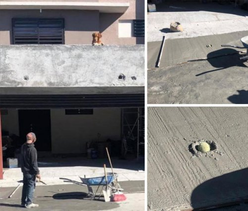 Смешные собаки, которые перенесли странность аж в другое измерение