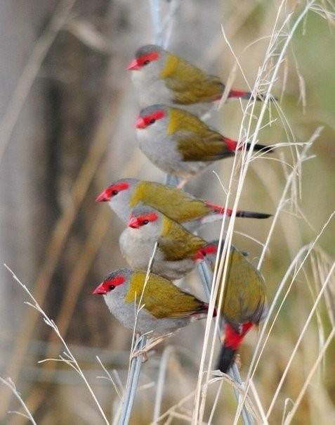 Необычные птицы животные