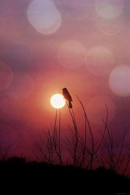 Красивые фотографии и картинки из сети