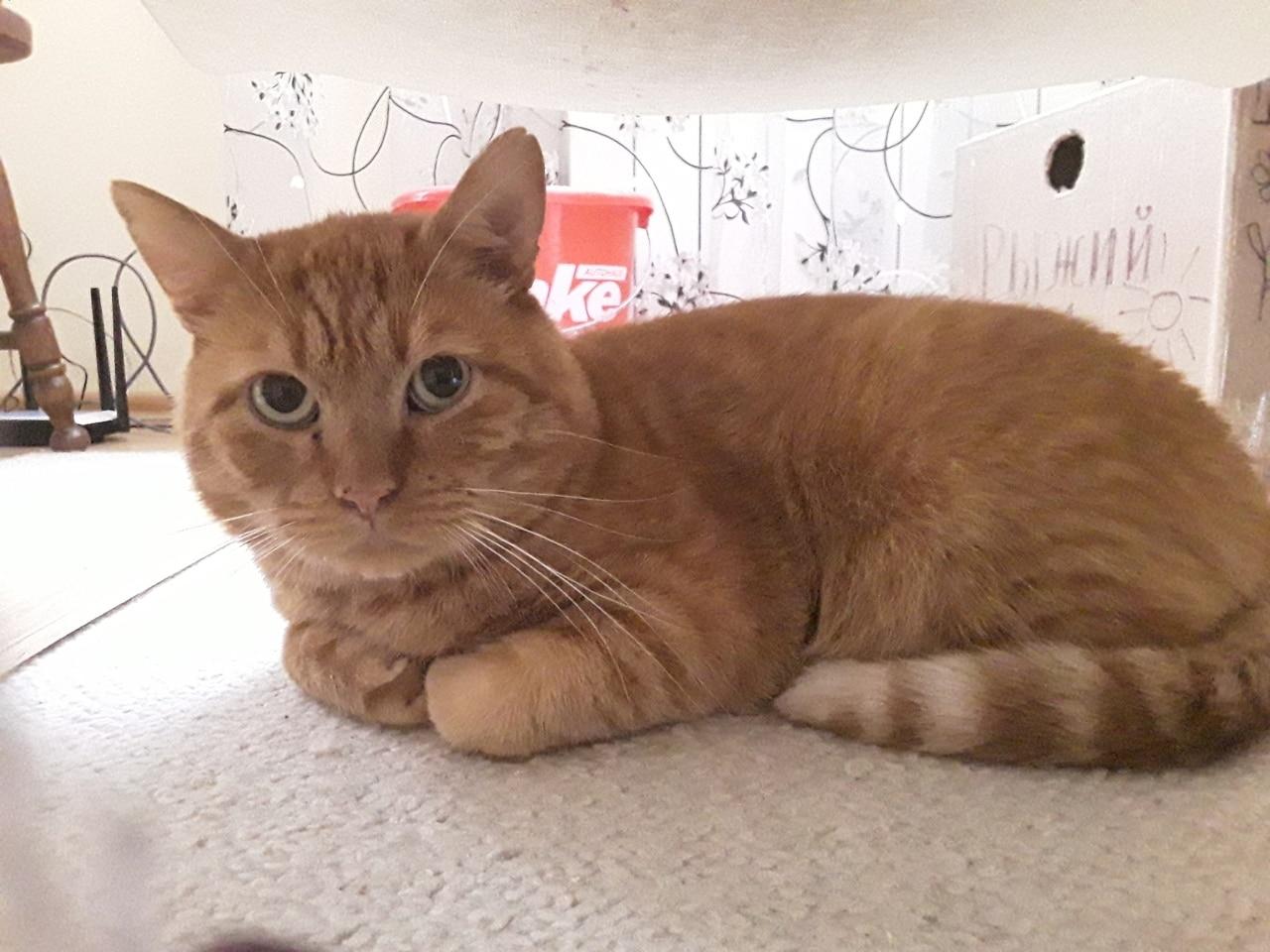 Кота выгнали на улицу и перестали кормить. Но ему встретилась семья, которая знала, что для счастья им нужно трое МУРлык! истории из жизни
