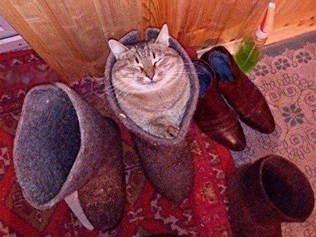 Как из сказки, котики в сапогах картинки