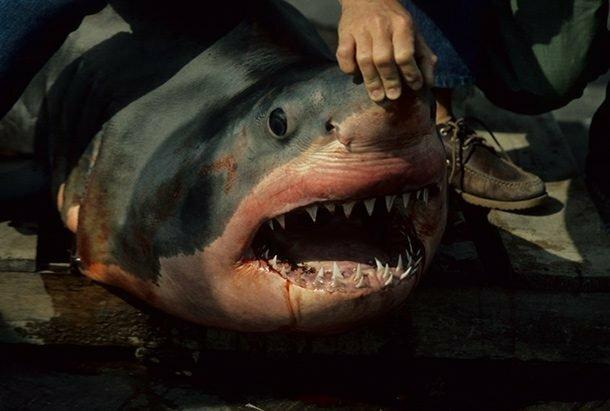 Сумасшедшие факты об акулах, которые вам могут быть интересны акулы