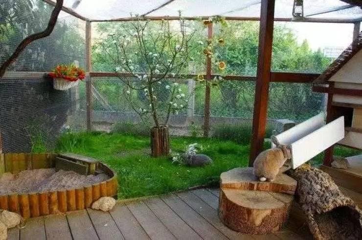 Роскошные жилища домашних питомцев, которые могли для них сделать только по-настоящему любящие владельцы домашние животные