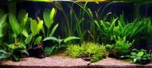 вибір акваріуму