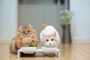 корм для активних котів